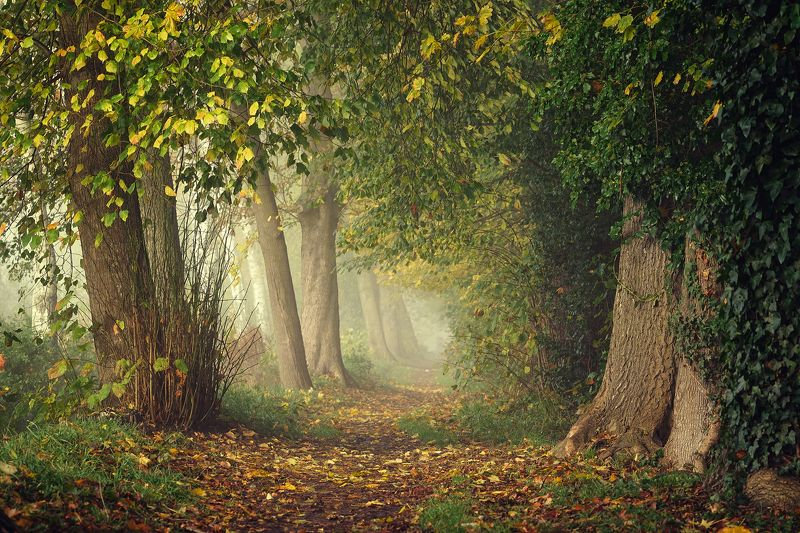 аллея alley autumn tree trees path road poland leaf mist magic foggy beautiful аллея..photo preview