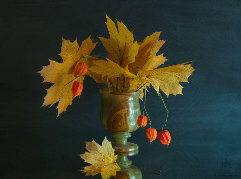 листья,кленовые,физалис,осень,утро Ноябрьское утроphoto preview