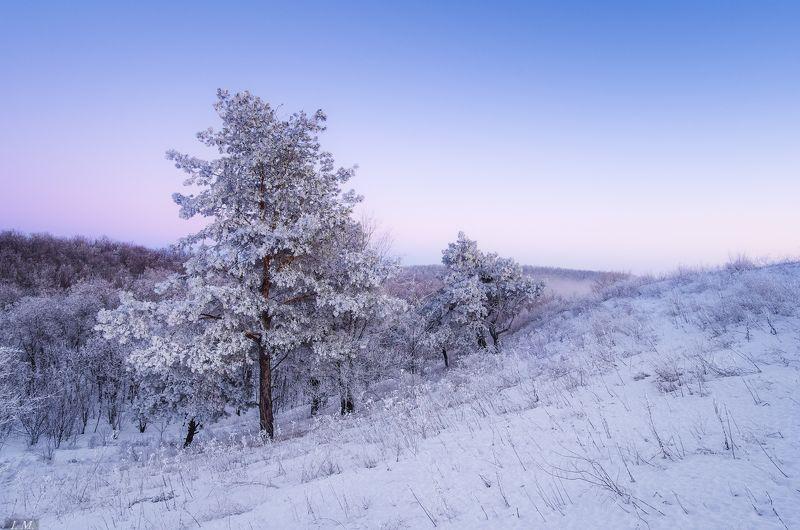 evening, Landscape, snow, winter, деревья, зима, иней, мороз, пейзаж, после заката, снег, hills, trees, frozen, wide angle Замороженные ..photo preview