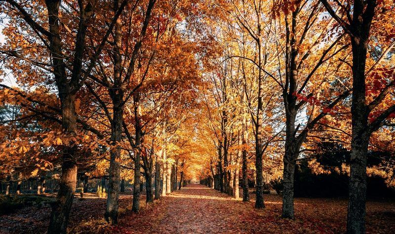 beauty, beautiful, light, autumn, travel, season, color, yellow, gold, people, weather, background, nature, fall, forest, природа, пейзаж, осень, сезон, цвет, погода, landscape Осеньphoto preview