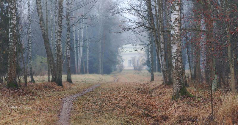 питер, павловск, павловский, осень, пейзаж, туман Ноябрь ...photo preview