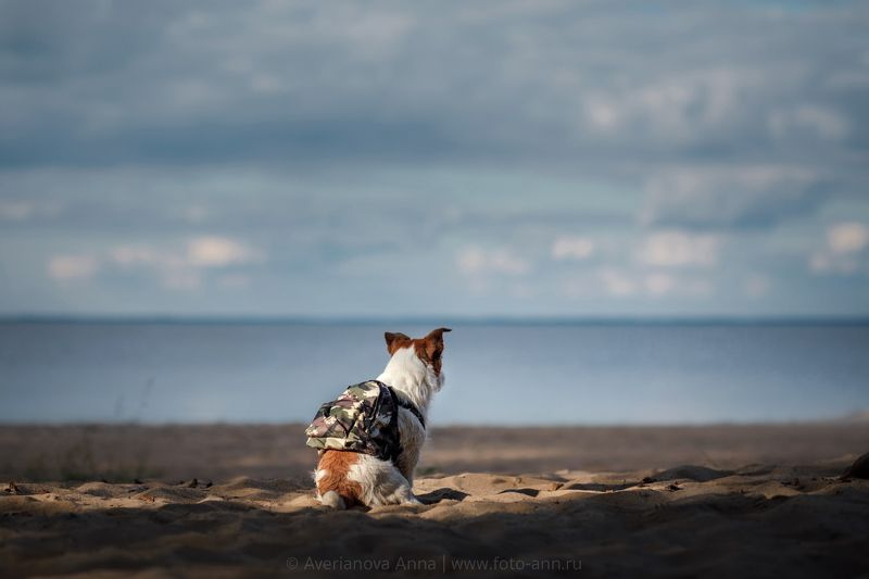 собака, природа, море Маленькая путешественница photo preview