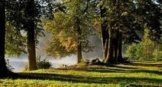Осеннее утро.....
