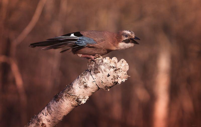 природа, лес, животные, птицы И улыбка, без сомненья, Вдруг коснется ваших глаз ... :)photo preview