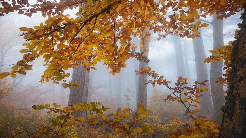 ай-петри,буковый, лес,туман,утро,осень,крым,утес, *****photo preview