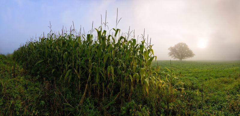 панорама, пейзаж, туман, латвия, сигулда Corn fieldphoto preview