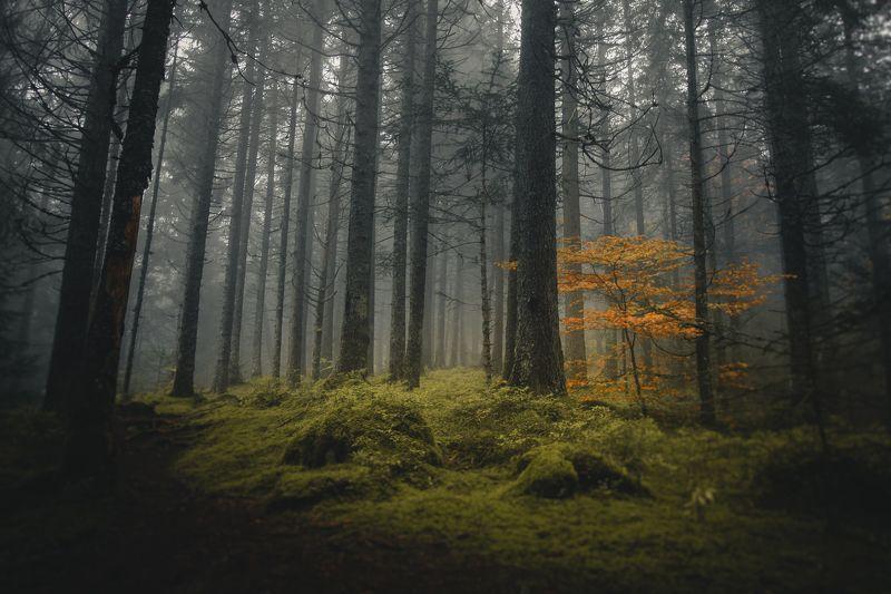 forest, nature, mist, fog, trees, alps, national park, france, tolkien, lord of the rings, onodrim, pagan, soul Tout ce qui est Or ne Brille pas, Tout ceux qui Errent ne sont pas Perdusphoto preview
