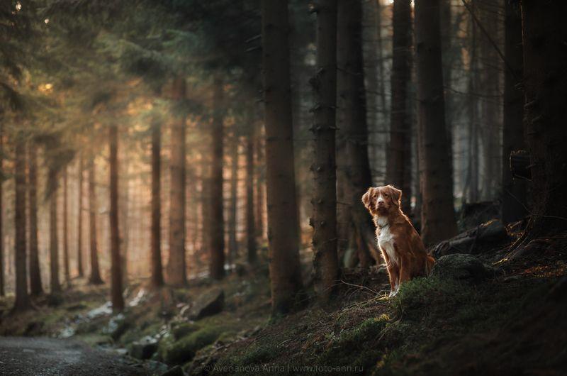 собака, природа, лес, животные в сказочном лесуphoto preview