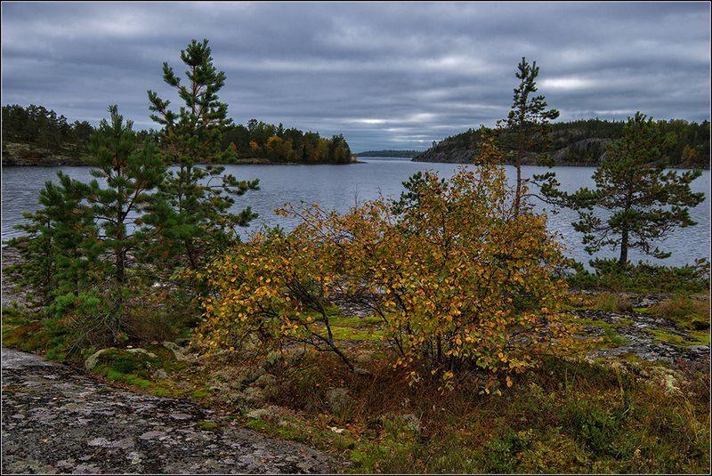 карелия, ладожское оз., осень *  *  *photo preview