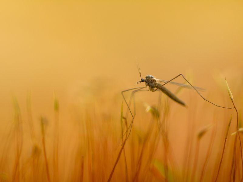 Зимние комарикиphoto preview