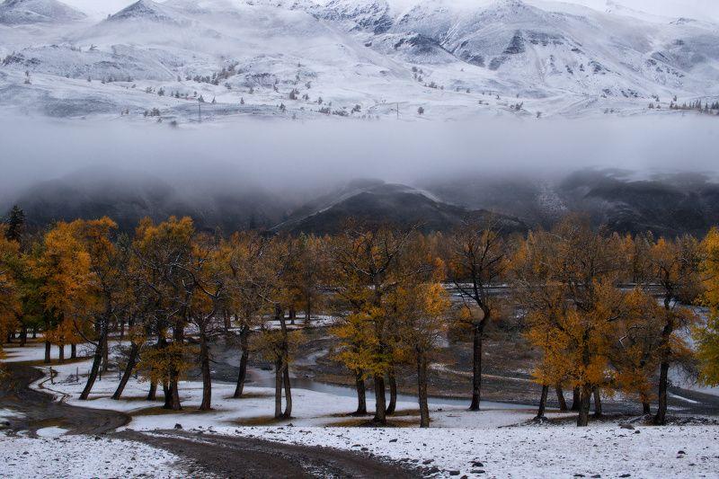 алтай, горы, осень Осенняя пасторальphoto preview