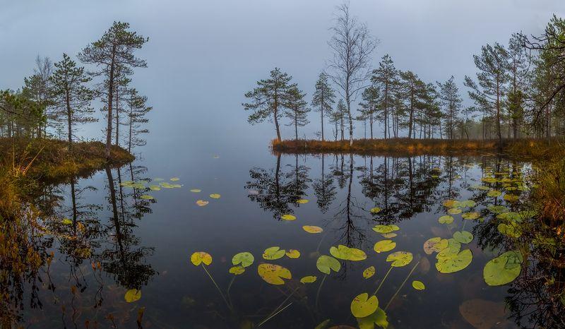 фототур, ленинградская область, деревья, сосна, озеро, рассвет, туман, трава, осень, октябрь, кувшинки. Осенние листья кувшинок.photo preview