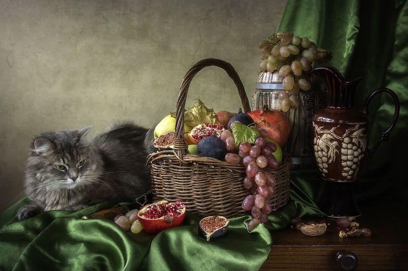 художественное фото, фруктовый натюрморт, постановочное фото, домашние питомцы, кошка Масяня Неужели это едят?photo preview