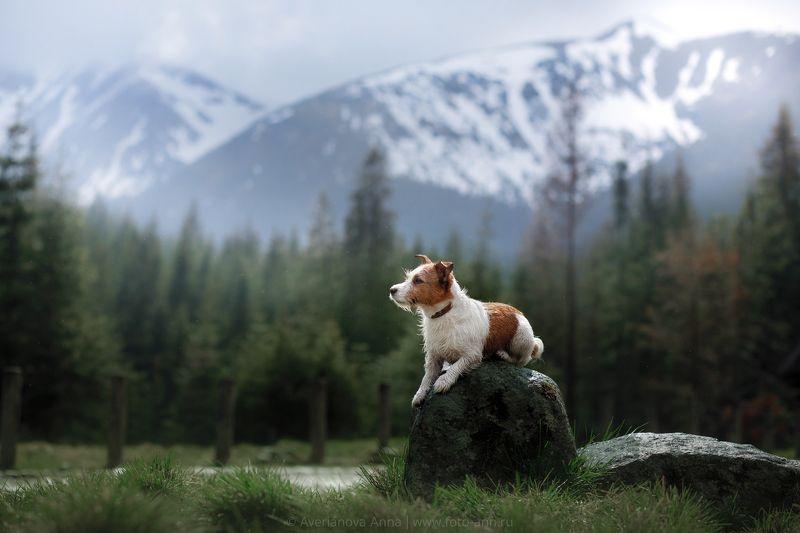 собака, горы, природа Дейзи в Горахphoto preview