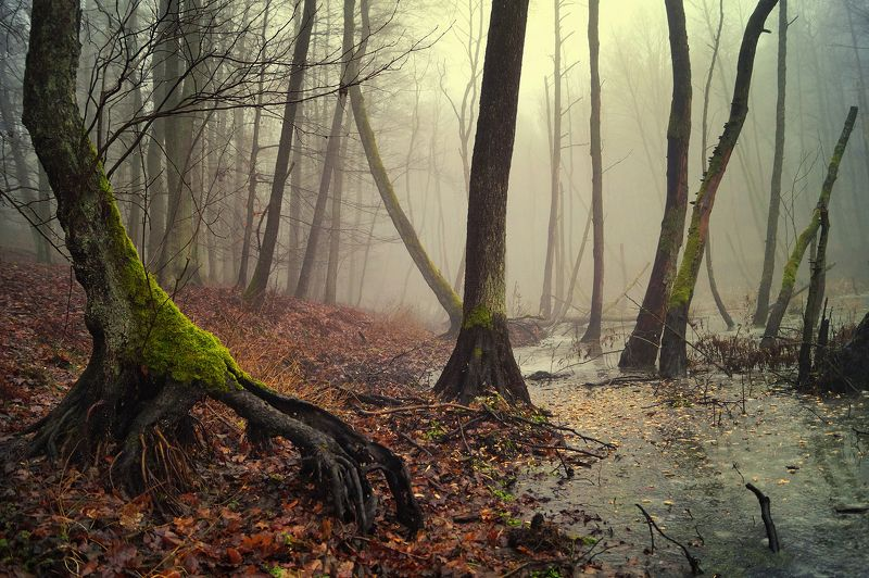 болотах bagna forest foggy lake water autumn tree trees mist forest в болотахphoto preview