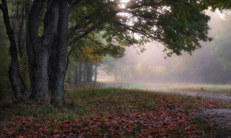 осень, утро, лес, туман, Утро осеннееphoto preview