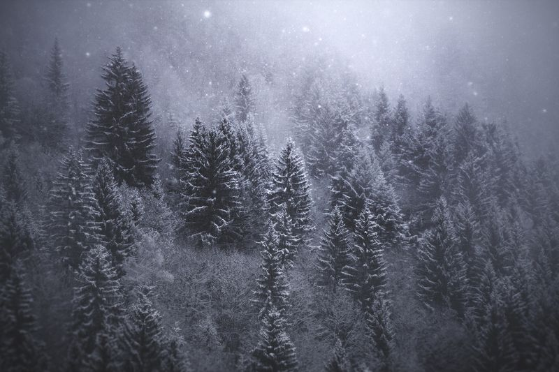 forest, nature, snow, mist, fog, trees, alps, national park, france, tolkien, lord of the rings, onodrim, pagan, soul Frozen Silencephoto preview