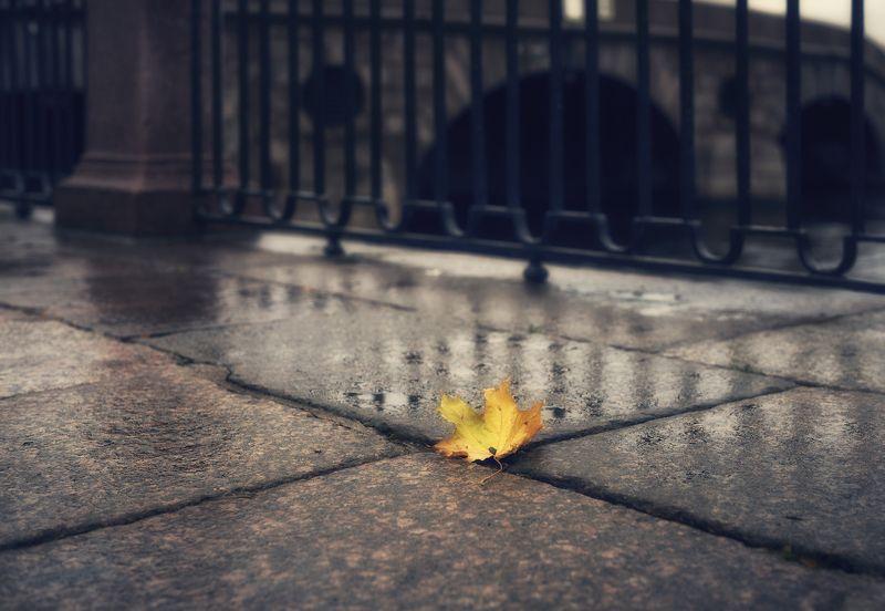 Питерская осень. Питерская осень.photo preview