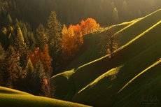Alpine autumn waves