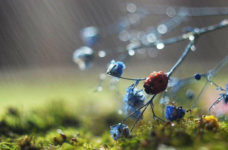 Дождливое утроphoto preview