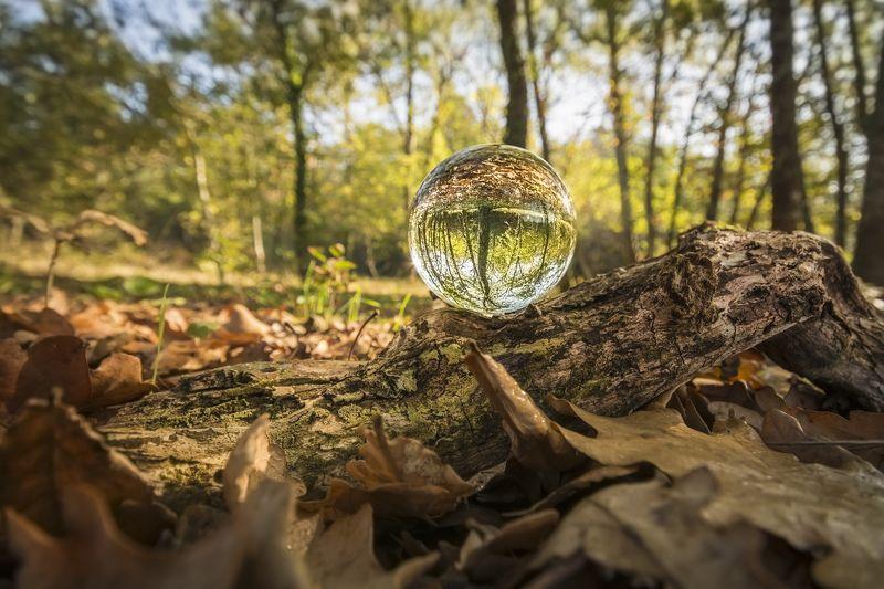 autumn, landscape, macro, nature, trunk, trees, photography Autumn insidephoto preview