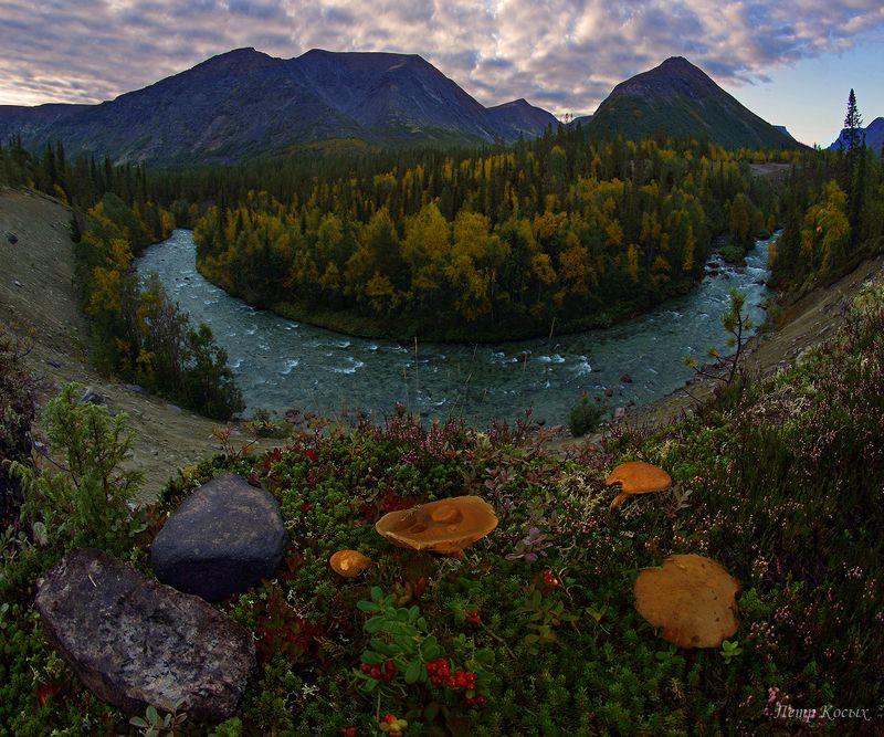 кунийок, хибины, мурманская, область, осень Дары лесаphoto preview