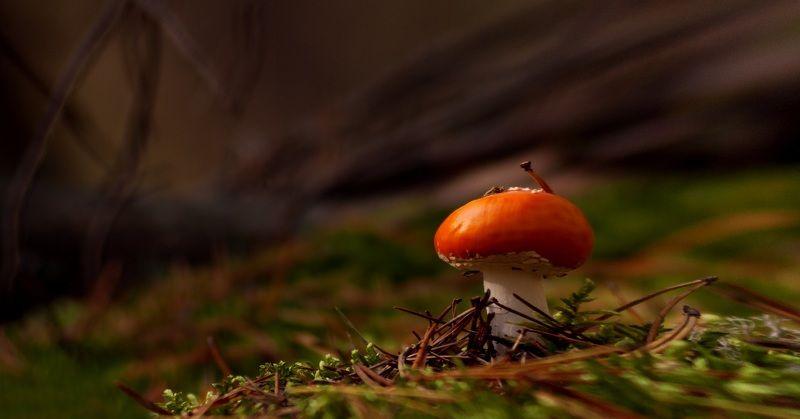 природа,лес,беларусь,осень Картинки из осеннего леса 15.photo preview