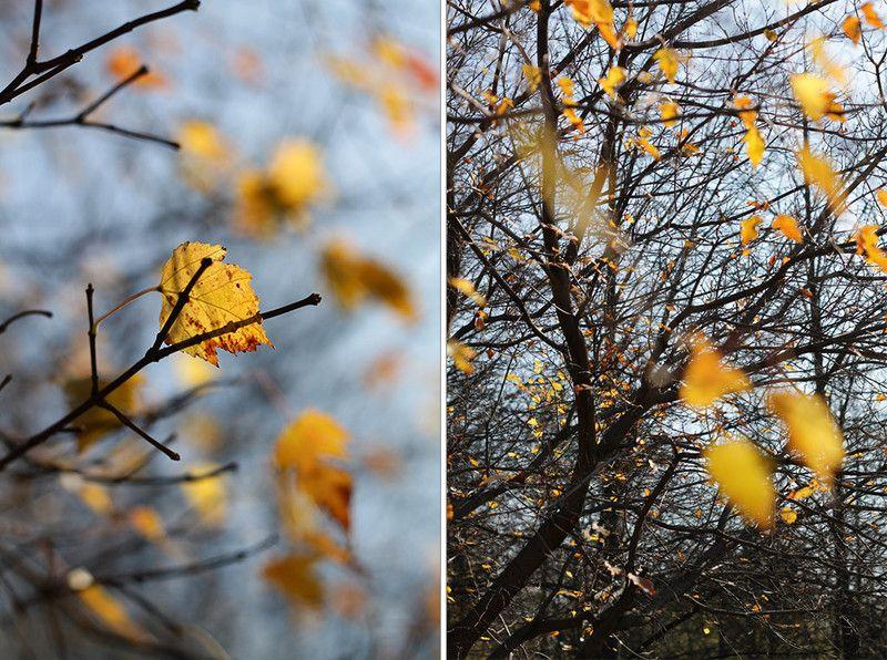 осень, листья Осенние листочкиphoto preview