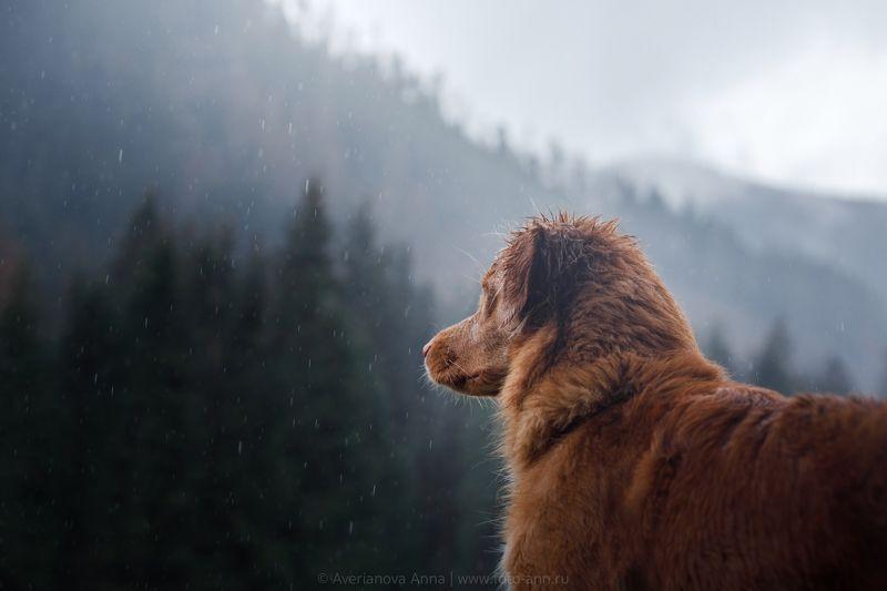 собака, природа, горы photo preview