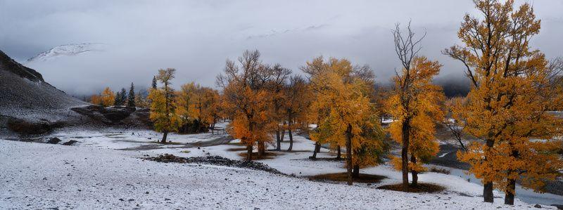 алтай, горы, осень Дружба сезоновphoto preview