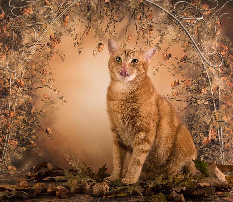 рыжий кот, кот, ginger, осень, листья, autumn, тыква, домашнии любимцы, cat Рыжий Кот на осеннем фоне - Autumn Gingerphoto preview