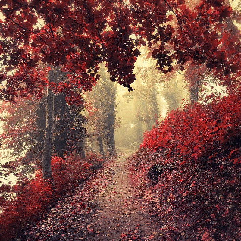 mod path autumn magic garden red forest tree trees road mist foggy poland волшебный садphoto preview