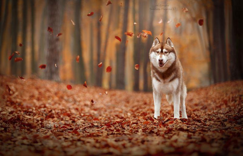 Осенний парк Кромлауphoto preview