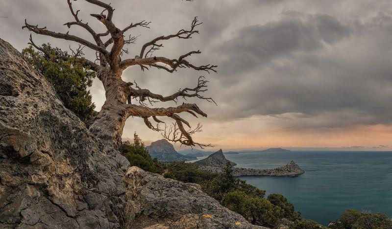крым,судак, утро,скалы, гора, ландшафт,пейзаж,солнце,новый свет,сосна, Новый Светphoto preview