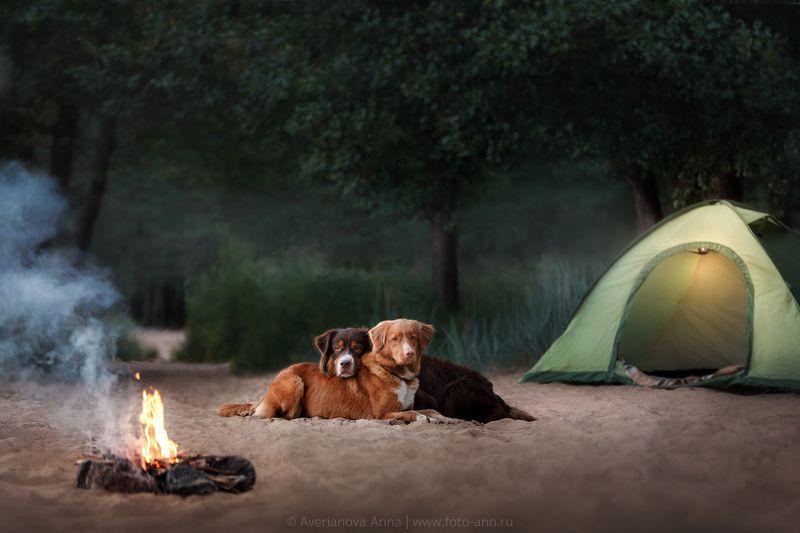 собака, природа вечер у костра photo preview