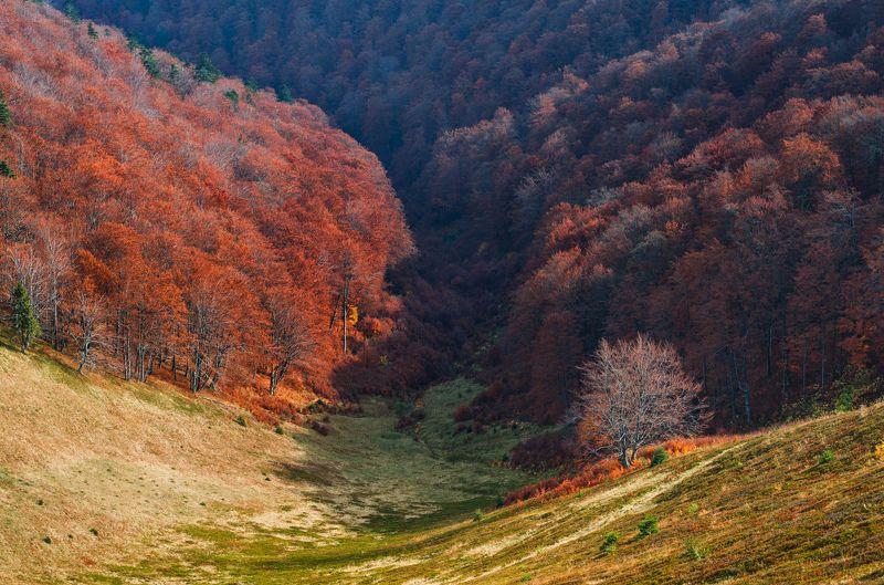 карпаты, боржавский хребет Осень в Карпатахphoto preview