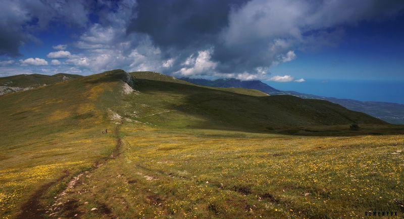 крым, чатыр-даг, лето, облака, цветы. Цветущий Чатыр-Даг.photo preview