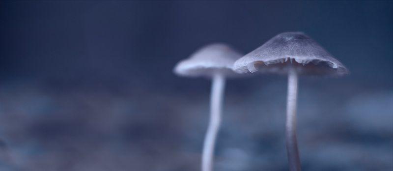 лес, осень, беларусь, природа В холодном тумане.photo preview