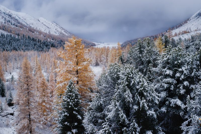 алтай, горы, осень, актру Зимним прикосновениемphoto preview