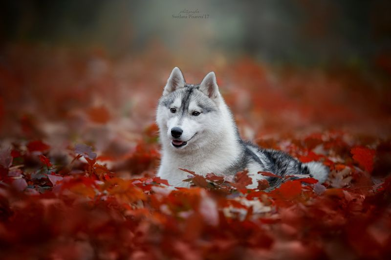 Осенний портретphoto preview