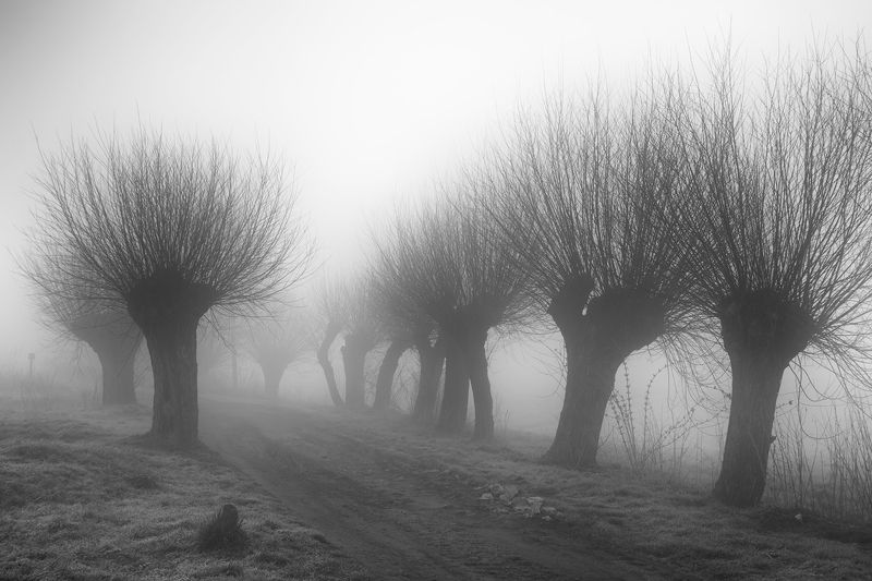 morning, mood, fog, road, willows, village Novemberphoto preview