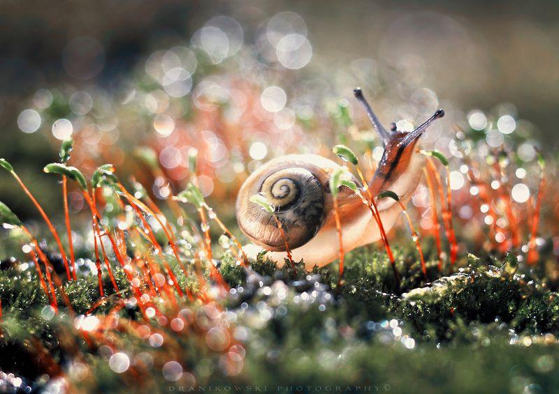 улитка slimak snail bokeh trioplan grass rain magic macro mog улиткаphoto preview