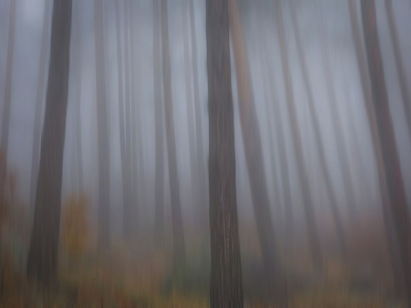 Misty woodsphoto preview