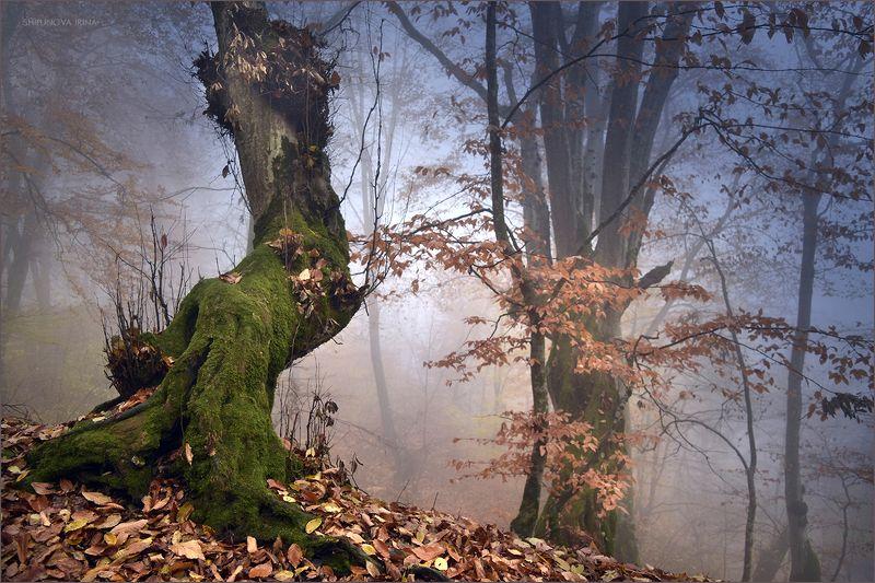 Волшебные туманы осени 2photo preview