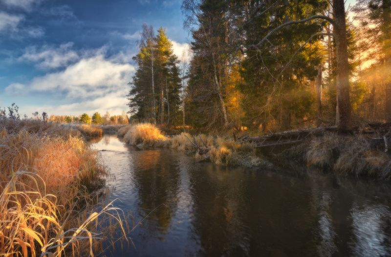 Ноябрьское солнышко...photo preview