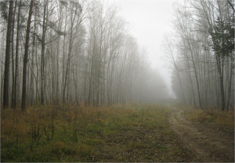 лес, туман, ноябрь Осенний туманphoto preview