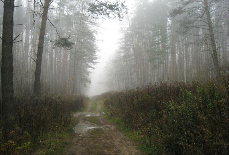 туман Туманные берегаphoto preview