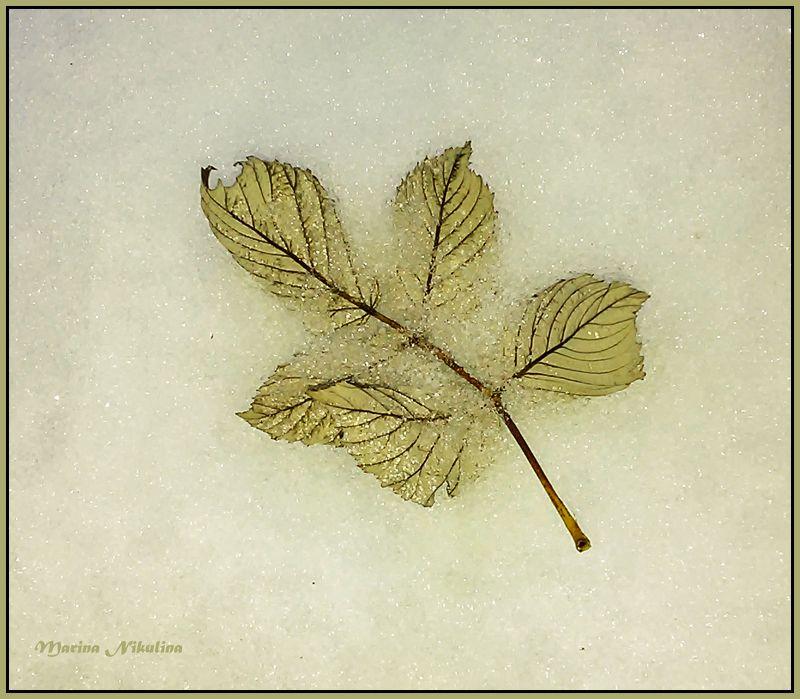 Листья на снегу.photo preview