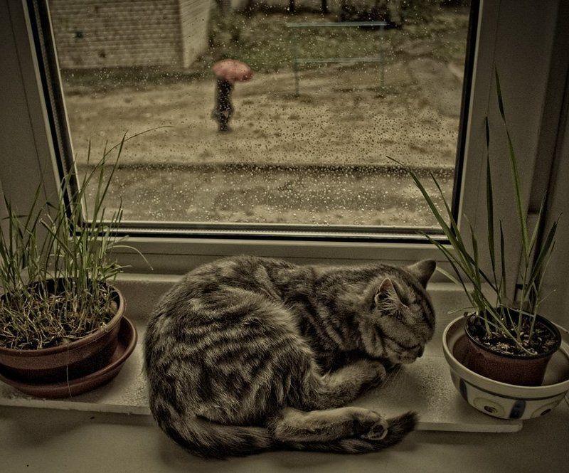 кошка, дождь, зонт Одинокий красный зонтикphoto preview