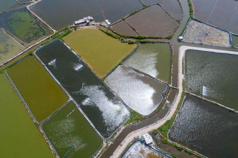 Вьетнам, Ке Га, пруды, вода, сельское хозяйство, агрокультура, аэро, дрон, aerial  Пятьдесят оттенков зелёногоphoto preview